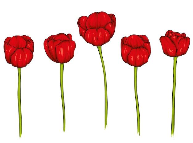 Conjunto de tulipas realistas.