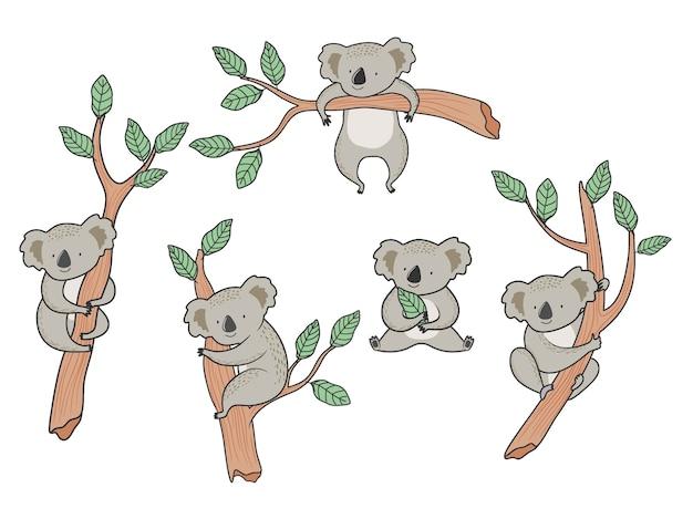Conjunto de ursos coala dos desenhos animados.