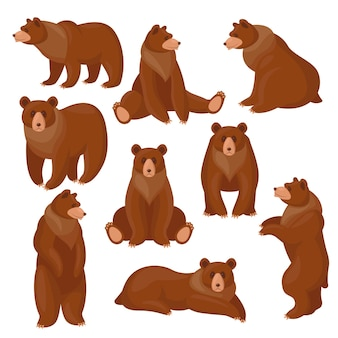 Conjunto de ursos pardos