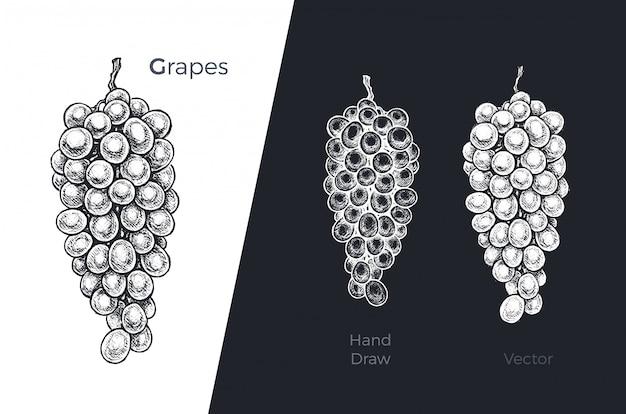 Conjunto de uvas de mão desenhada