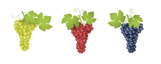 Conjunto de uvas vermelhas, brancas e pretas