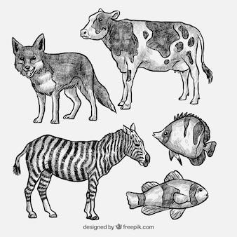 Conjunto de vacas desenhadas à mão e animais selvagens