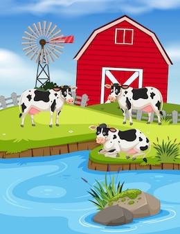 Conjunto de vacas na fazenda