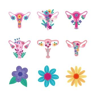 Conjunto de vaginas e flores
