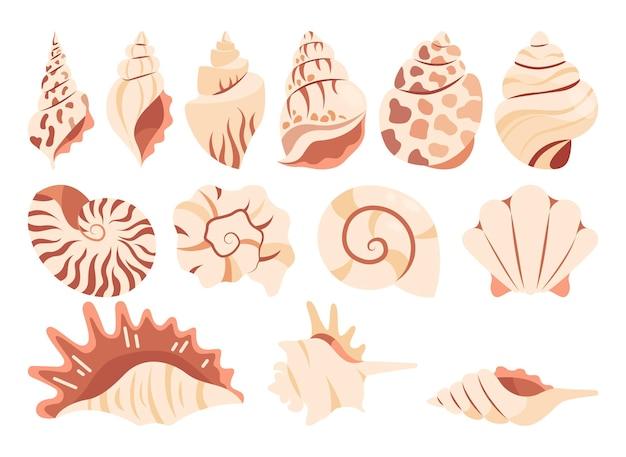 Conjunto de várias conchas do mar em fundo branco.