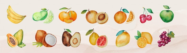 Conjunto de várias frutas isoladas em aquarela