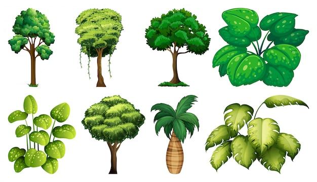 Conjunto de variedade de plantas e árvores