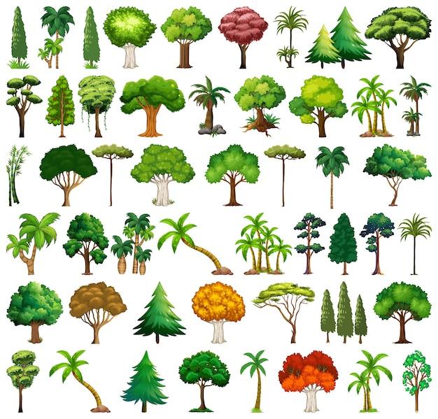 Conjunto de variedades de plantas e árvores