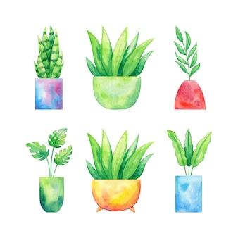 Conjunto de vasos de plantas desenhados à mão em aquarela