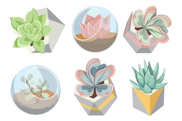Conjunto de vasos florarium de vidro e betão com plantas suculentas, pequenos jardins, recipientes diy para interior, bolas transparentes e potes geométricos para o crescimento de flores. ilustração em vetor de desenho animado