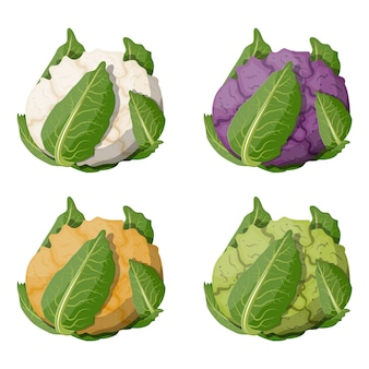 Conjunto de vegetais de couve-flor.