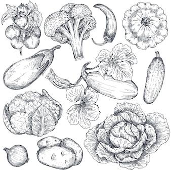 Conjunto de vegetais de fazenda de vetor de mão desenhada no estilo de desenho. tomate, brócolis, repolho, cebola, berinjela, pimenta, pepino. objetos vegetarianos gráficos orgânicos para cardápio de restaurante, mercearia