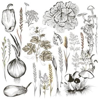 Conjunto de vegetais desenhados à mão