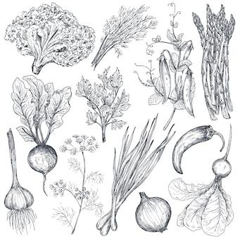 Conjunto de vegetais e ervas de fazenda vetorial desenhada à mão em estilo de esboço aspargos, cebola, ervilha, pimenta