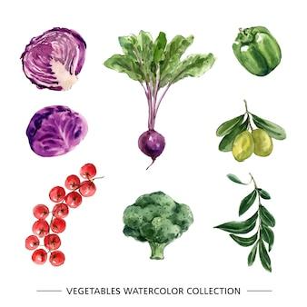 Conjunto de vegetais em aquarela isolado