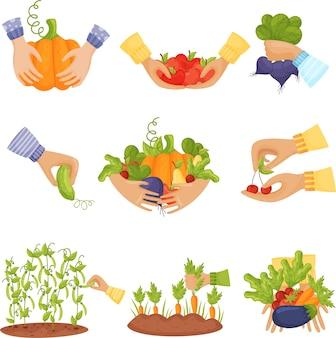 Conjunto de vegetais em cestos e mãos