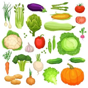 Conjunto de vegetais frescos, coleção de alimentos saudáveis e vegetarianos