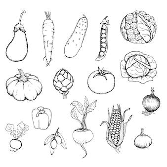 Conjunto de vegetais orgânicos frescos desenhados à mão