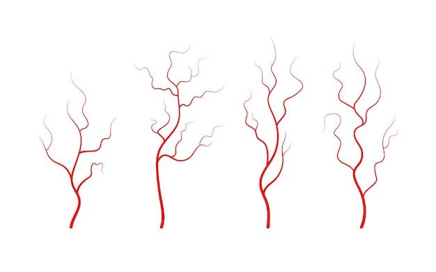 Conjunto de veias e artérias humanas vasos sanguíneos e capilares vermelhos ramificados Vetor Premium
