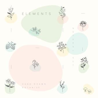 Conjunto de vetor de elementos botânicos mão desenhada