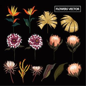 Conjunto de vetor de elementos naturais tropicais florais mão desenhada