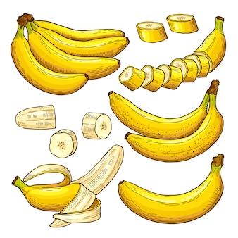 Conjunto de vetores de bananas coloridas. símbolos tropicais. mão, desenho, ilustrações