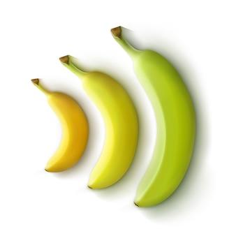 Conjunto de vetores de bananas verdes amarelas isoladas no fundo branco