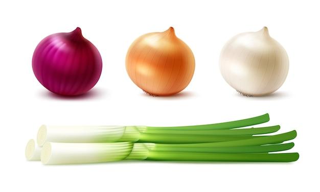 Conjunto de vetores de bulbos de cebolas verdes frescas inteiras amarelas vermelhas brancas