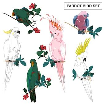 Conjunto de vetores de coleção de papagaios tropicais