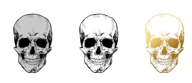 Conjunto de vetores de crânio desenho desenhado à mão crânios de ouro cinza ocre preto e branco isolados no branco