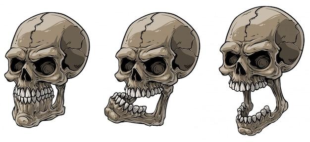 Conjunto de vetores de crânios humanos assustador realista dos desenhos animados
