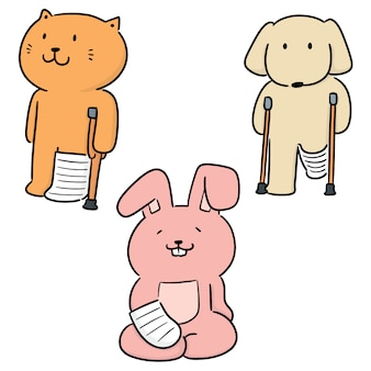 Conjunto de vetores de elenco ortopédico de uso de animais