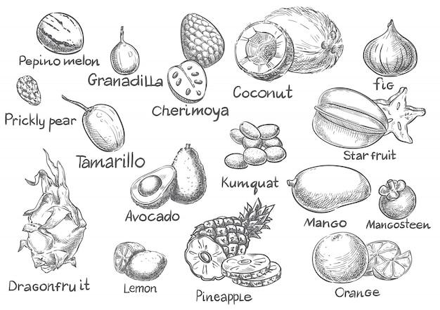Conjunto de vetores de esboço de frutas exóticas