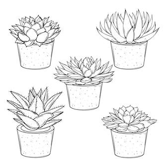 Conjunto de vetores de esboços de plantas caseiras, suculentas em vasos em um fundo branco eps10
