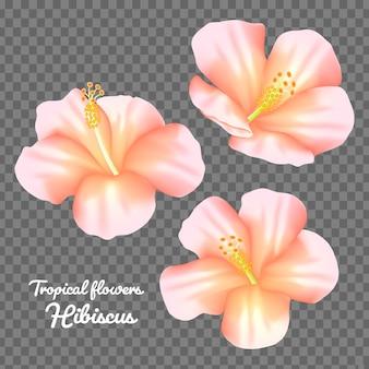Conjunto de vetores de flor de hibisco