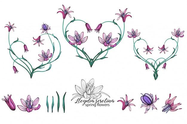 Conjunto de vetores de flores delicadas da primavera. flores. flores da primavera. coração de flores.