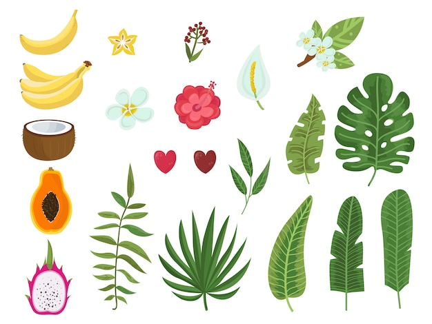 Conjunto de vetores de folhas tropicais, flores e frutas