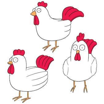 Conjunto de vetores de frango