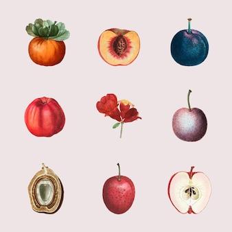 Conjunto de vetores de frutas e flores com ilustração desenhada à mão