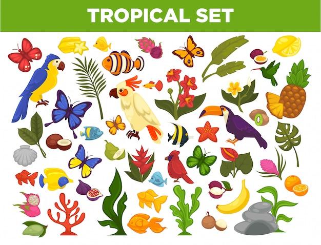 Conjunto de vetores de frutas tropicais, exóticas, aves, peixes e plantas