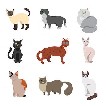 Conjunto de vetores de gatos bonitos.