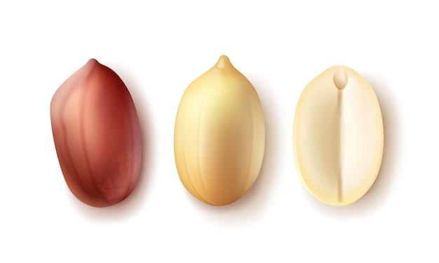 Conjunto de vetores de grãos de amendoim descascados inteiros e sem casca, vista superior isolada no fundo branco