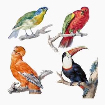 Conjunto de vetores de ilustração de pássaros vintage, remixado de obras de arte de aert schouman