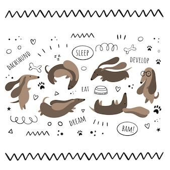 Conjunto de vetores de isolados por dachshunds. сartoon, estilos do doodle