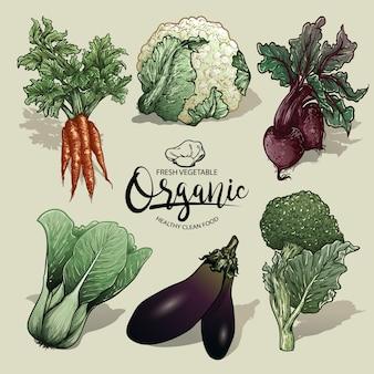 Conjunto de vetores de legumes