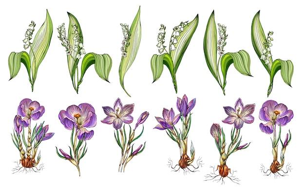 Conjunto de vetores de lírio do vale e flores de açafrão