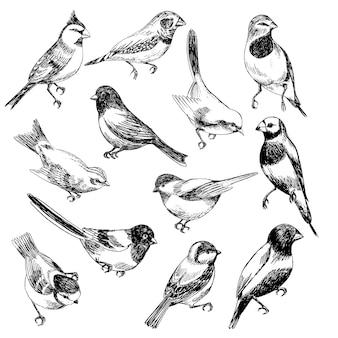 Conjunto de vetores de mão desenhada de pássaros em stile de esboço