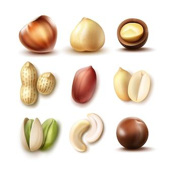 Conjunto de vetores de nozes diferentes: avelã inteira e meia, macadâmia, pistache, amendoim, parte superior do caju, vista lateral isolada no fundo branco