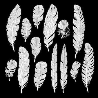 Conjunto de vetores de penas de aves de mão desenhada de esboço