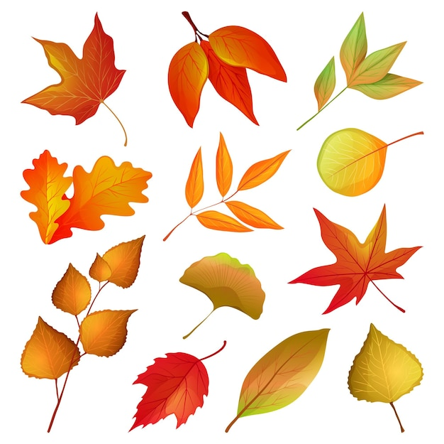 Conjunto de vetores de ramos e folhas de outono decorativas